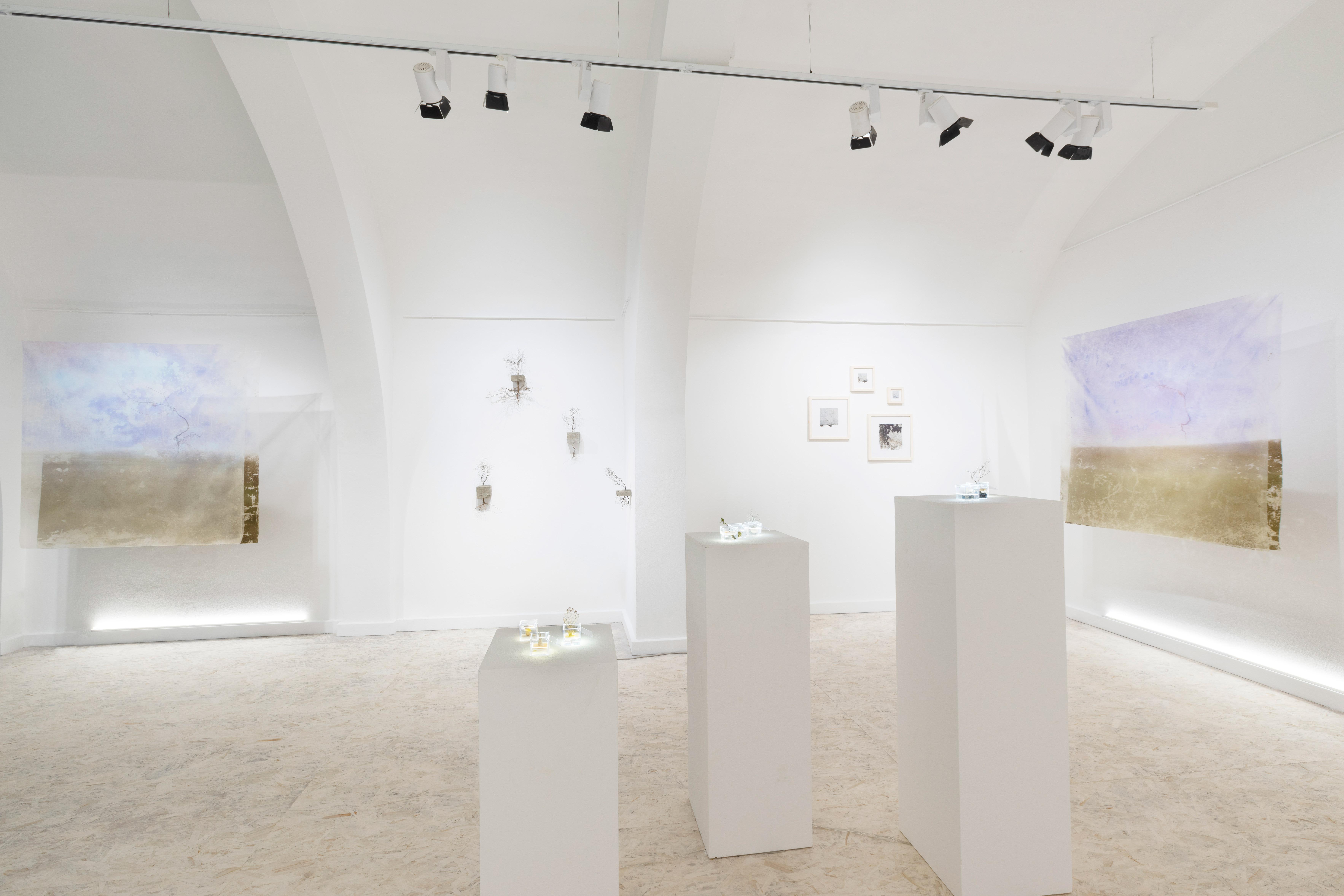 nous-art-gallery-san-gimignano
